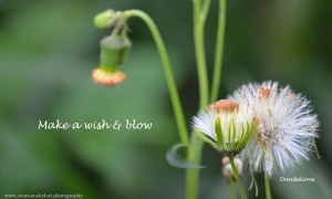 Make a wish & share, the power of a wish can change a life.